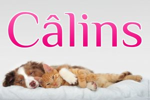 calin-chien-chat